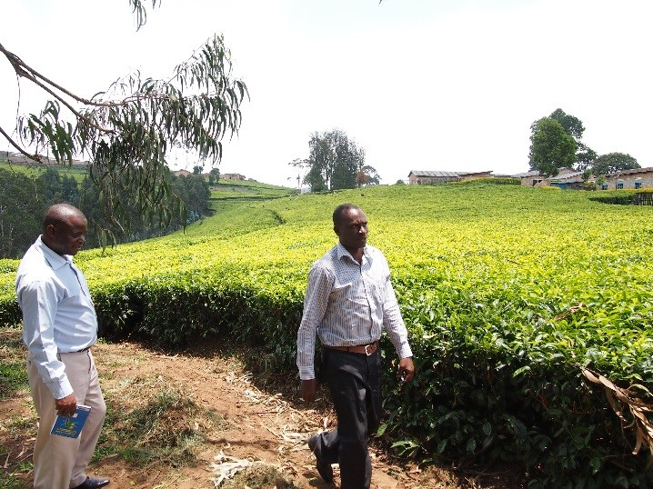 CFP implementation in tea sector, Rwanda
